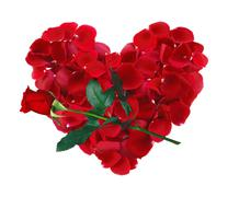 Beautiful heart of red rose petals and rose flower isolated on white Stock Photos
