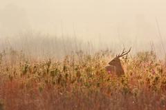 Deer alert Stock Photos