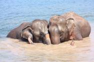 Stock Photo of elephant relationship