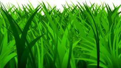 Rapidly growing spring grass Stock Footage