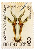 Postal stamp printed in ussr shows a gazelle Stock Photos
