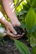 senior female hands giving fertilizers to the plants - stock photo