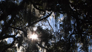 Stock Video Footage of Time Lapse, Sun sparkles through thick, Live Oak canopy, spanish moss, flares