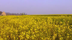 Rapeseed harvesting to enrich the soil. Stock Footage