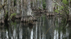 Everglades National Park birds cypress swamp rain HD 2182 Stock Footage