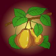 two mature yellow pears - stock illustration