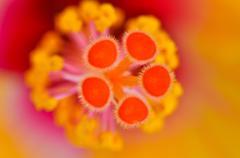 stamen flower - stock photo