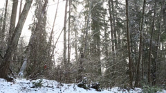 Forest Snow foggy 002 - stock footage