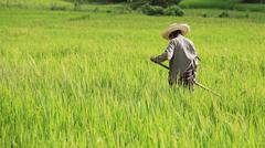 farmer chopping grass by spade - stock photo