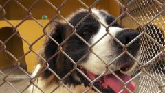 Stock Video Footage of Caged Dogs, Canines, Neglect, Abuse