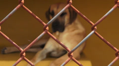 Lonely Caged Dogs, Canines, Neglect, Abuse Stock Footage