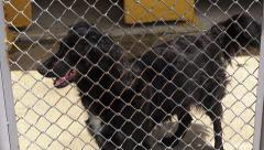 Stock Video Footage of Caged Dogs, Barking, Canines, Neglect, Abuse