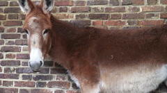 Donkeys, Mules, Farm Animals Stock Footage