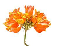 Beautiful orange flower - stock photo