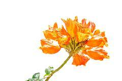 Beautiful orange flower Stock Photos