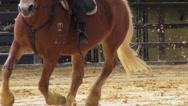 Stock Video Footage of Horseback Riding, Horses, Animals