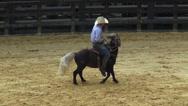 Stock Video Footage of Pony, Miniature Horse, Horses, Farm Animals