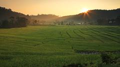 Terraced rice field with sunbeam at sunrise Stock Photos
