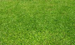 Stock Photo of nice green grass backgrround