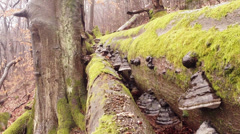 Early spring in the Old mountain wood Stock Footage