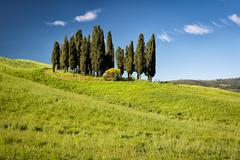 Cypress on hills, Tuscany, Italy - stock photo