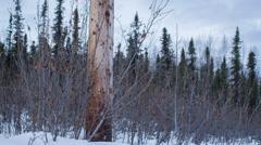 Alaska, Telephone Pole Detail, Sunrise Snow 2 Stock Footage