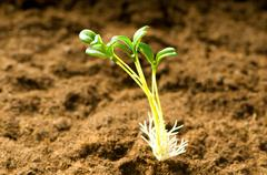 Stock Photo of Green seedling illustrating concept of new life