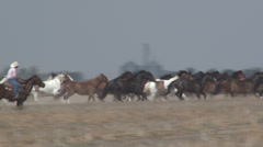 Horse Roundup Stock Footage