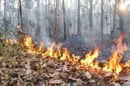 Stock Photo of destroyed by burning tropical forest ,thailand