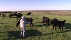 Feeding Cattle Stock Footage