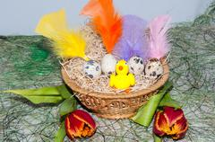 Easter egg and chick Stock Photos