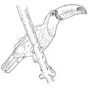 toucan bird sitting on a tree branch. - stock illustration