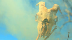 Creepy goat skull halloween Stock Footage