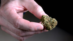 Inspecting marijuana bud in hand 2. Stock Footage
