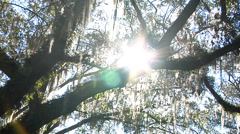 Time Lapse, Sun travels down Silhouette of Live Oak limb in canopy Stock Footage