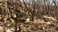 trees and boulders in spring. Landscape. Focus approach HD Footage