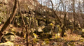 Panorama of trees and boulders in spring. Landscape Footage