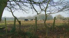 Rural UK scene (dolly) - stock footage