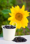 Stock Photo of Sunflower seeds in bucket and sunflower