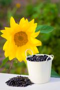 Sunflower seeds in bucket and sunflower - stock photo