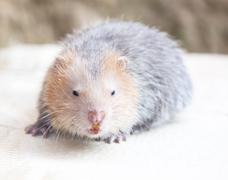 wildlife species of rodent family - stock photo