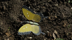 Plastic butterfly garden decoration in the wind Stock Footage