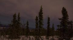 Alaska, Changing Sky Through the Trees Stock Footage