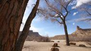 Stock Video Footage of Cottonwood Trees in the American Southwest on the Colorado Plateau