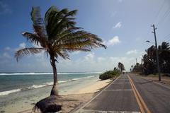 Palm Tree in San Andres - stock photo