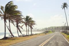 Road and Pal trees in San Andres Stock Photos