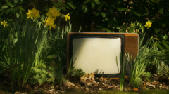 Abandoned 1970's TV (Flowers in wind) Stock Footage