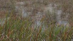 Everglades National Park Sawgrass swamp HD 2085 Stock Footage