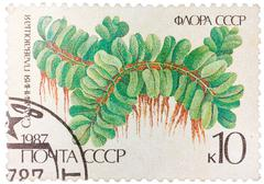 stamp printed in the ussr shows floating salbiniya - stock photo