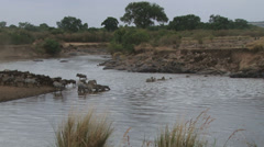 A very easy crossing of wildebeests through mara river Stock Footage